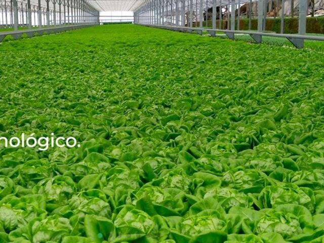 Uitgelichte afbeelding voor AgroIberia