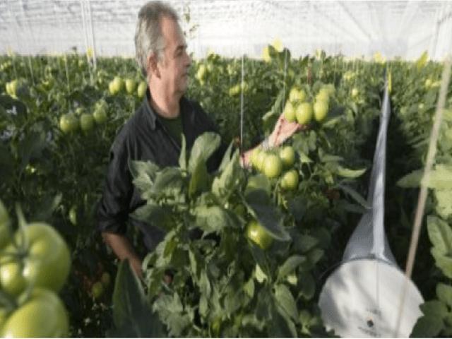 Online presentatie sectorstudie reststromen Spaanse tuinbouw uitgelichte afbeelding