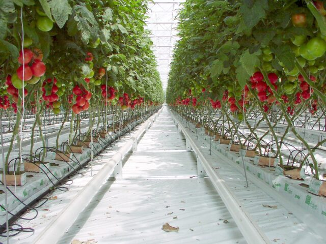 Imagen destacada de Food Innovation Hubs en Países Bajos