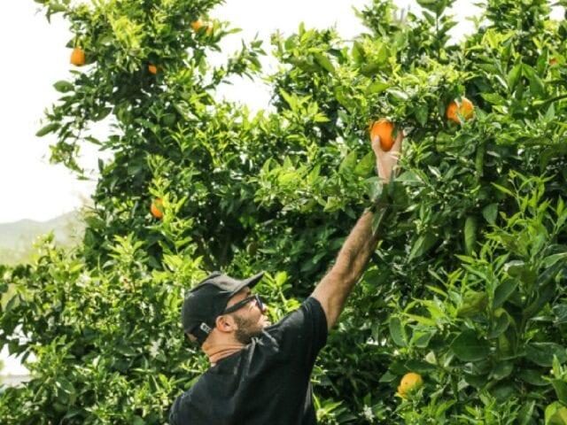 Imagen destacada de Los supermercados venden más alimentos sostenibles en Países Bajos